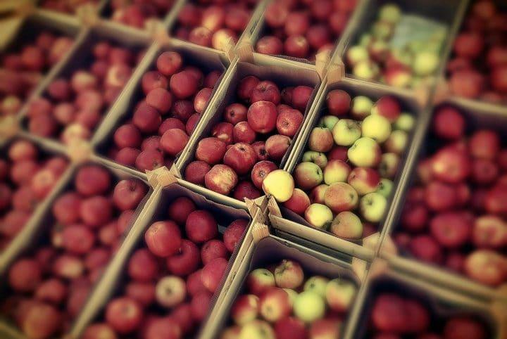Herbstsaison © Thomas Ulrich, Pixabay